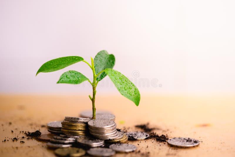 Το νέο φυτό αυξάνονται και ο σωρός νομισμάτων στοκ εικόνες