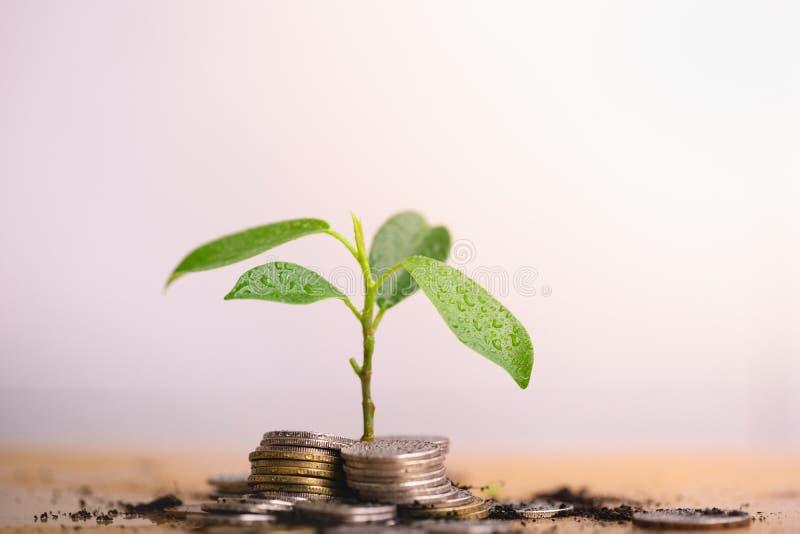 Το νέο φυτό αυξάνονται και ο σωρός νομισμάτων στοκ φωτογραφία