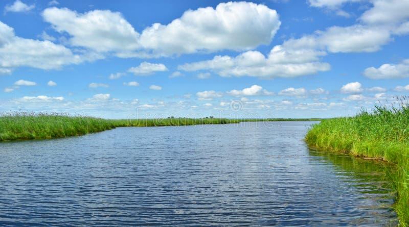 Το νερό στον ορίζοντα και τους πράσινους καλάμους στοκ εικόνες