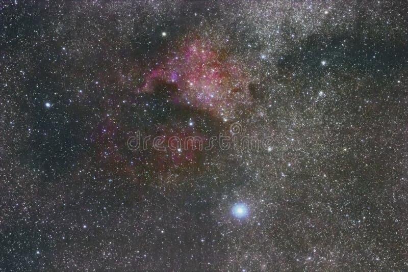 Το νεφέλωμα της Βόρειας Αμερικής στο αστερισμό του Κύκνου Φωτεινότερο αστέρι Deneb στοκ εικόνες με δικαίωμα ελεύθερης χρήσης