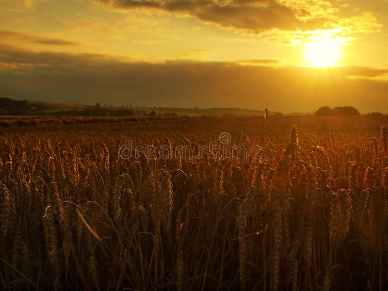 Το νεφελώδες πορτοκαλί υπόβαθρο ουρανού ηλιοβασιλέματος Ρύθμιση των ακτίνων ήλιων στον ορίζοντα στο αγροτικό λιβάδι στοκ εικόνα με δικαίωμα ελεύθερης χρήσης