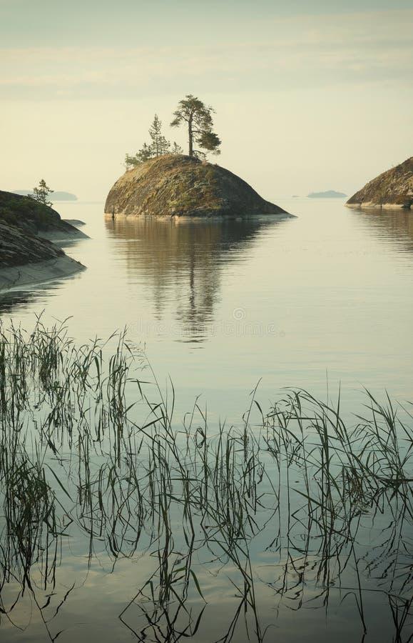 Το νησί με ένα δέντρο και μια αντανάκλαση και χλόη στο πρώτο πλάνο στη λίμνη Ladoga στοκ εικόνες
