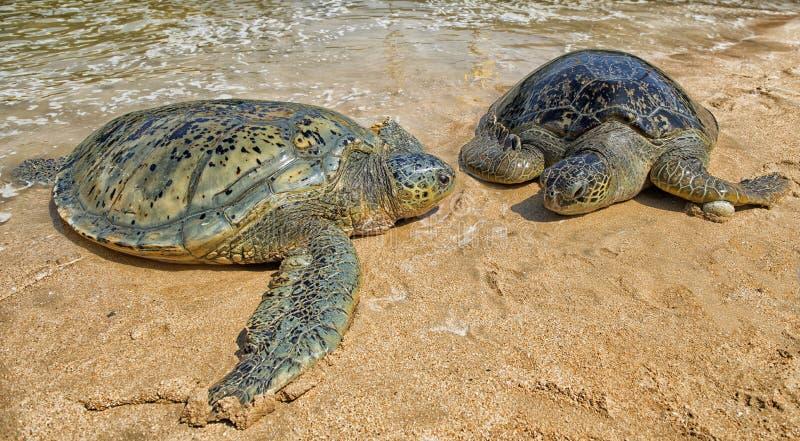 Το νησί χελωνών Serangan, Serangan βρίσκεται στο νότο του νησιού του Μπαλί στοκ εικόνες