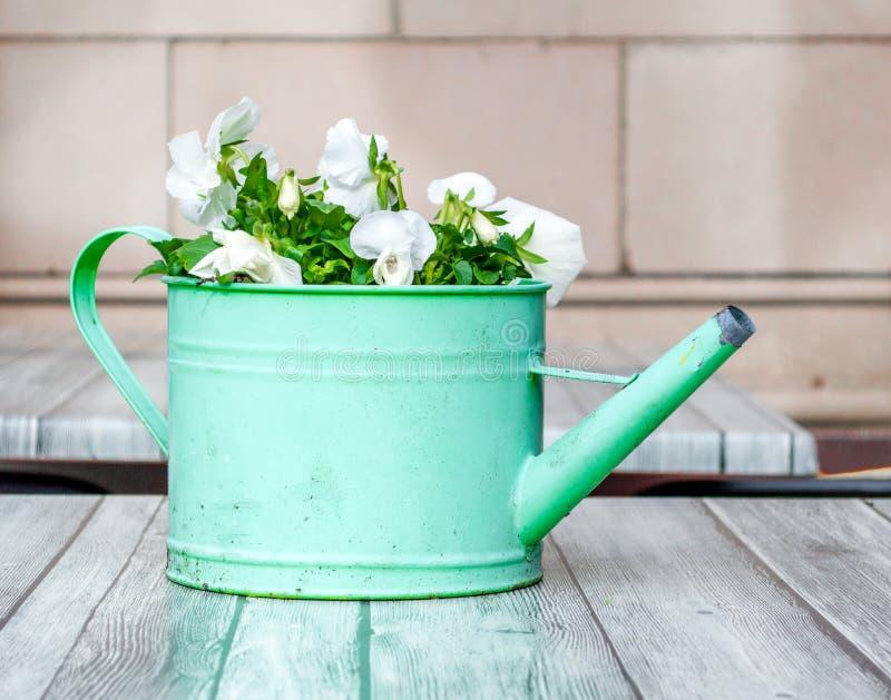 Το ξεπερασμένο πράσινο πότισμα μπορεί γεμισμένος με τα λουλούδια σε έναν ξύλινο πίνακα στοκ εικόνα με δικαίωμα ελεύθερης χρήσης
