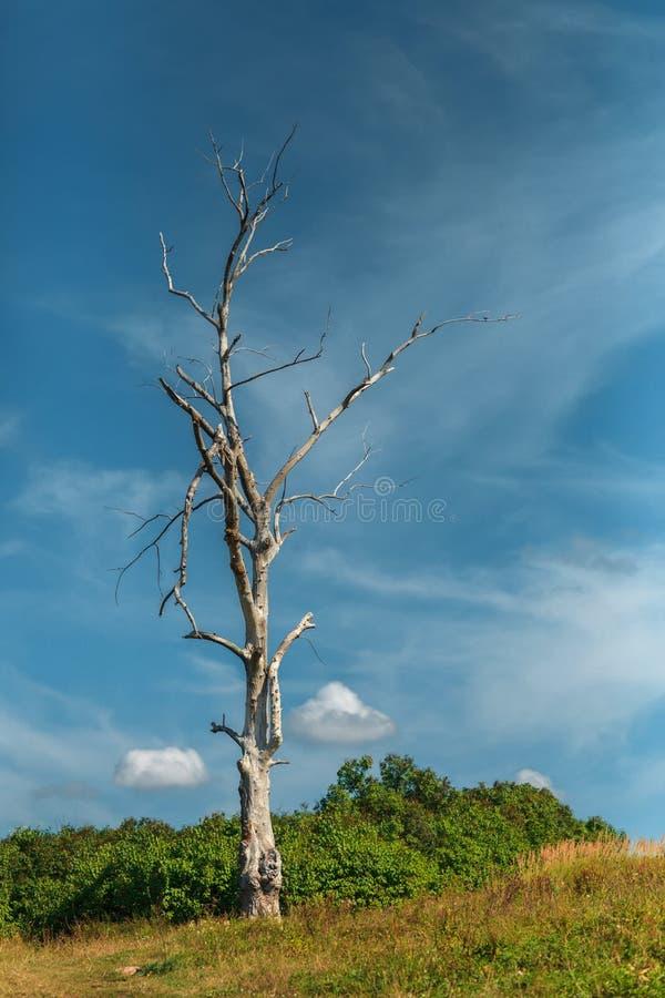Το ξηρό μόνο δέντρο στα πλαίσια του νεφελώδους ουρανού στοκ φωτογραφίες με δικαίωμα ελεύθερης χρήσης