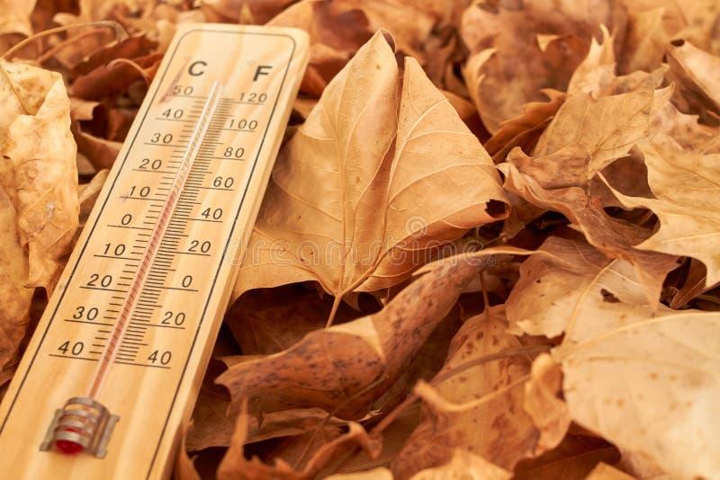 Το ξύλινο θερμόμετρο σε ένα υπόβαθρο πεσμένος βγάζει φύλλα στοκ εικόνες με δικαίωμα ελεύθερης χρήσης
