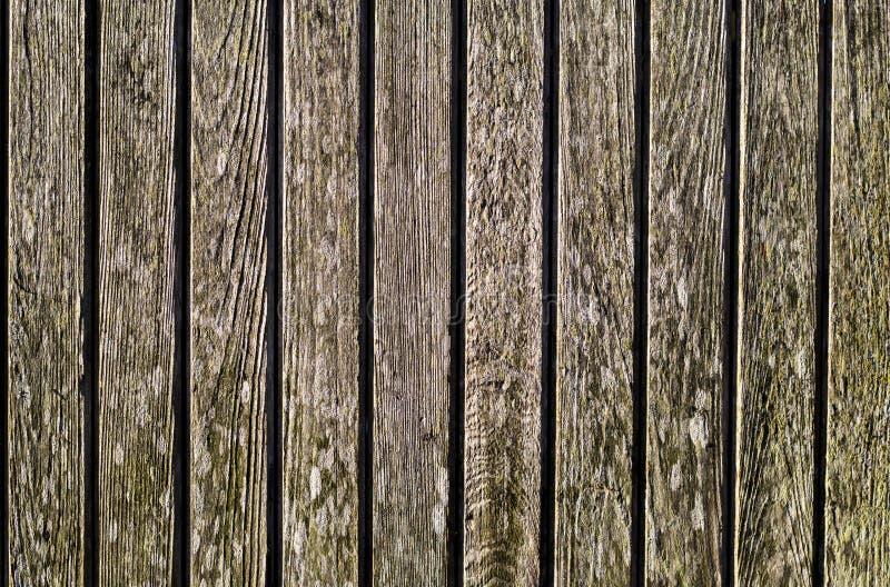 Το ξύλινο υπόβαθρο σύστασης με τους διαφορετικούς τύπους λειχήνων α στοκ εικόνες με δικαίωμα ελεύθερης χρήσης
