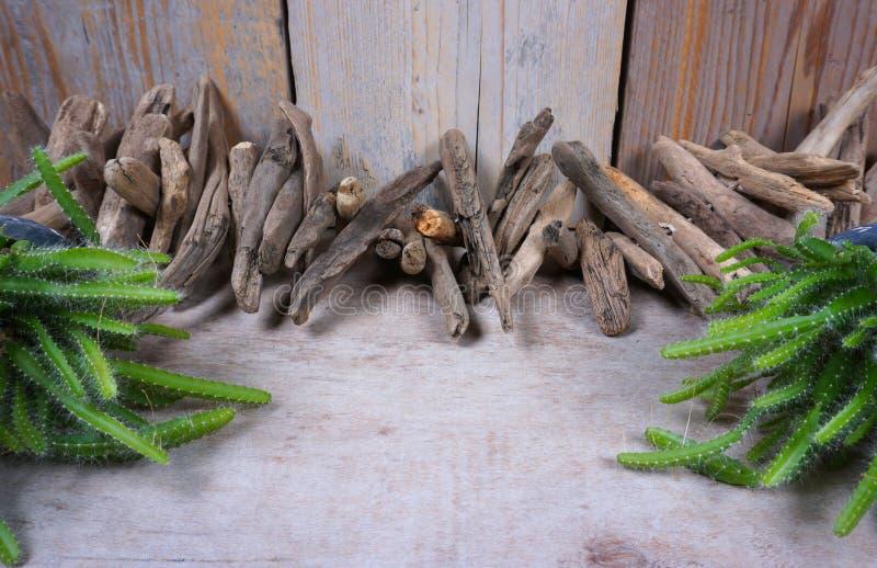 Το ξύλο κλίσης στο ξύλινο υπόβαθρο, διακόσμηση, θαλάσσια στοιχεία, θάλασσα αντιτίθεται και εγκαταστάσεις κάκτων με το διάστημα αν στοκ φωτογραφίες με δικαίωμα ελεύθερης χρήσης