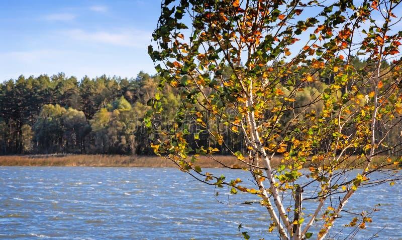 Το ξύλο φθινοπώρου στην τράπεζα της μεγάλης όμορφης λίμνης στοκ εικόνες με δικαίωμα ελεύθερης χρήσης
