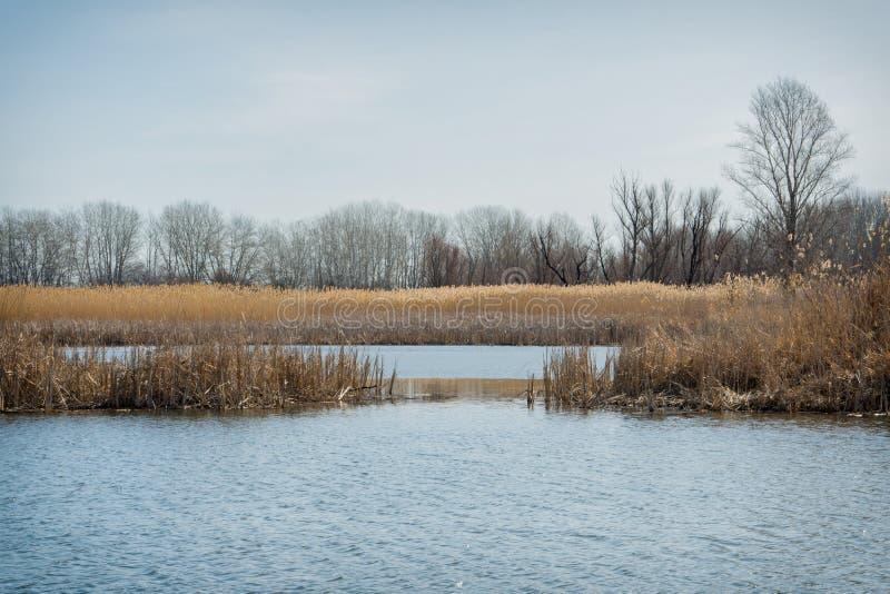 Το ξύπνημα της φύσης μετά από τη χειμερινή διαχείμαση στοκ φωτογραφία με δικαίωμα ελεύθερης χρήσης