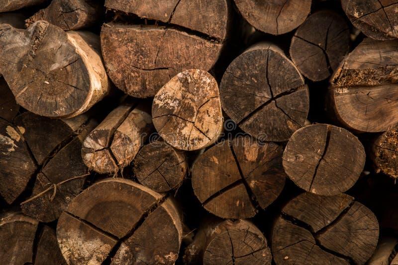 Το ξύλινο άνευ ραφής υπόβαθρο με τα κολοβώματα, περικοπές δέντρων, καταγράφει, υπόβαθρο οικολογίας στοκ εικόνες με δικαίωμα ελεύθερης χρήσης