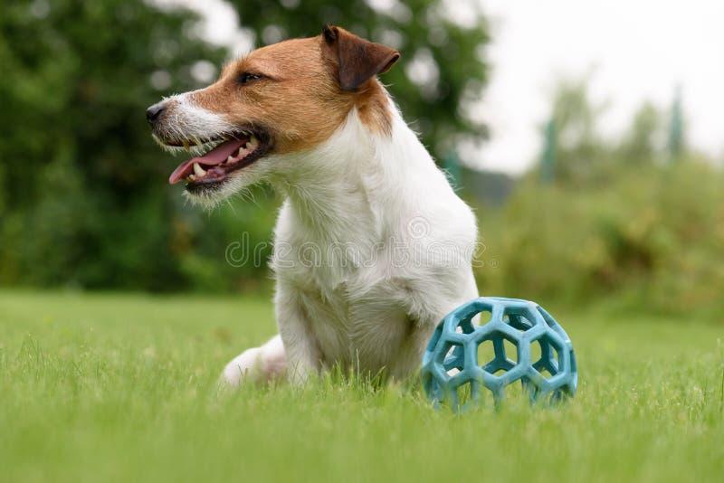 Το οκνηρό σκυλί δεν θέλει να παίξει με τη σφαίρα στοκ εικόνα με δικαίωμα ελεύθερης χρήσης