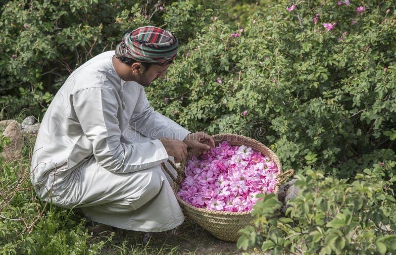 Το ομανικό άτομο με τα ροδαλά πέταλα για να κάνει αυξήθηκε νερό που χρησιμοποιείται ως παραδοσιακή ιατρική  καλλυντικά  συστατικό στοκ φωτογραφίες με δικαίωμα ελεύθερης χρήσης