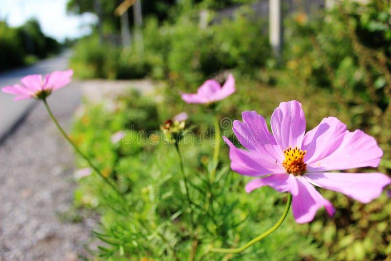 Το λουλούδι ήλιων λέει γειά σου σε σας στοκ φωτογραφία με δικαίωμα ελεύθερης χρήσης