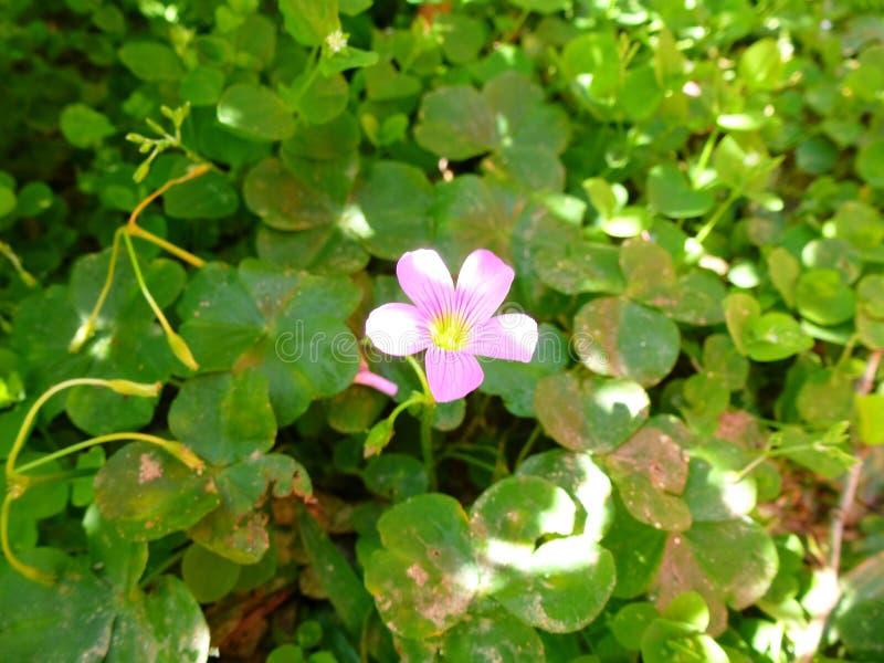 Το λουλούδι και βγάζει φύλλα στοκ εικόνα με δικαίωμα ελεύθερης χρήσης