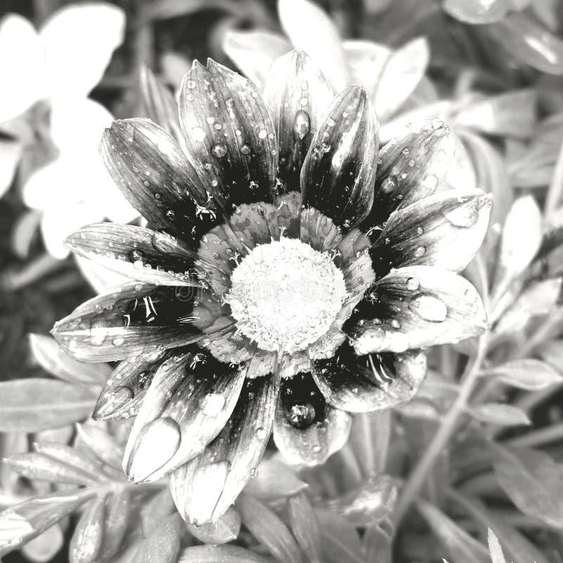 Το λουλούδι μπορεί μέσα να πλημμυρίσει στοκ εικόνες