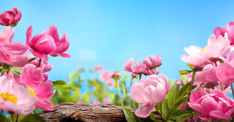το λουλούδι ρόδινο αυξήθηκε στοκ εικόνα