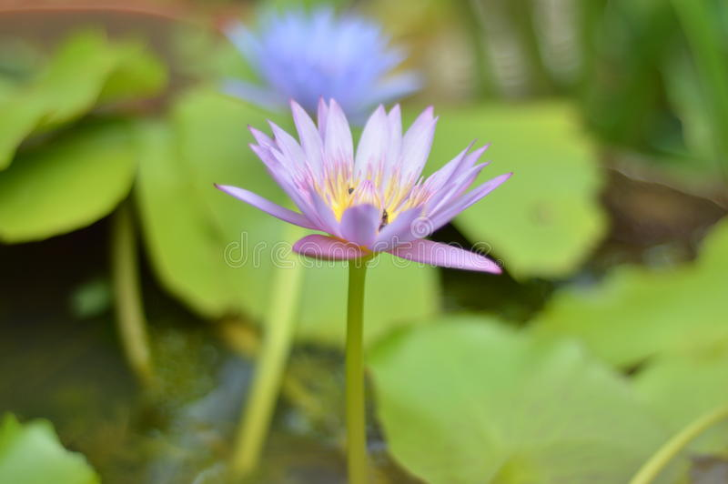 Το λουλούδι στο μου στοκ εικόνες
