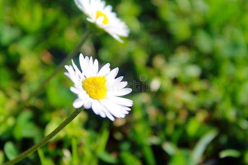Το λουλούδι της ζωής στοκ εικόνα