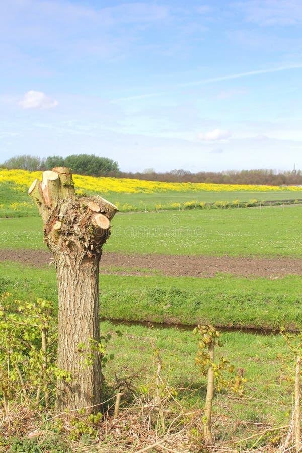 Το ολλανδικό τοπίο πόλντερ με η ιτιά στοκ φωτογραφία με δικαίωμα ελεύθερης χρήσης