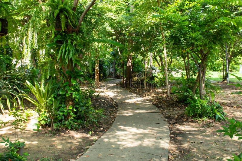 Το πάρκο είναι στη σκιερή κάλυψη δέντρων στοκ φωτογραφία