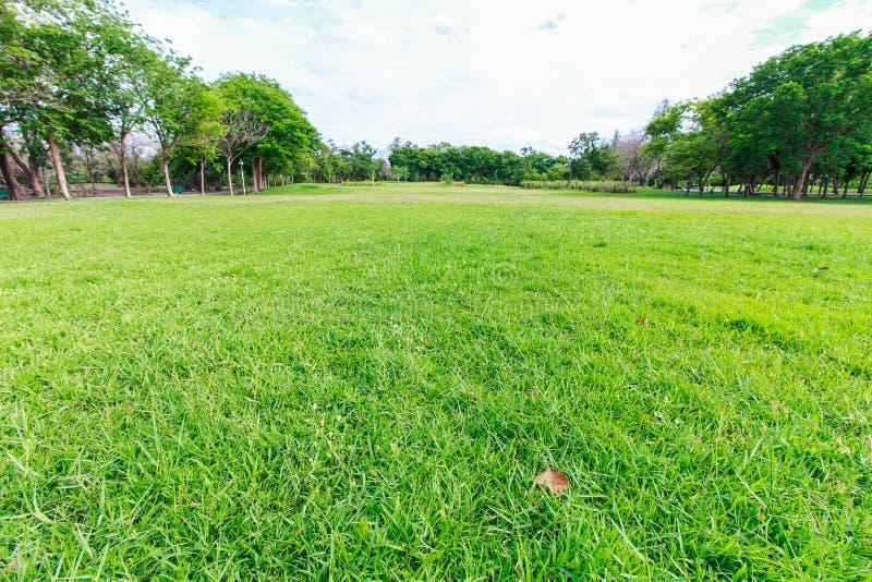 Το πάρκο και η χλόη landscap στην πόλη στοκ εικόνα με δικαίωμα ελεύθερης χρήσης