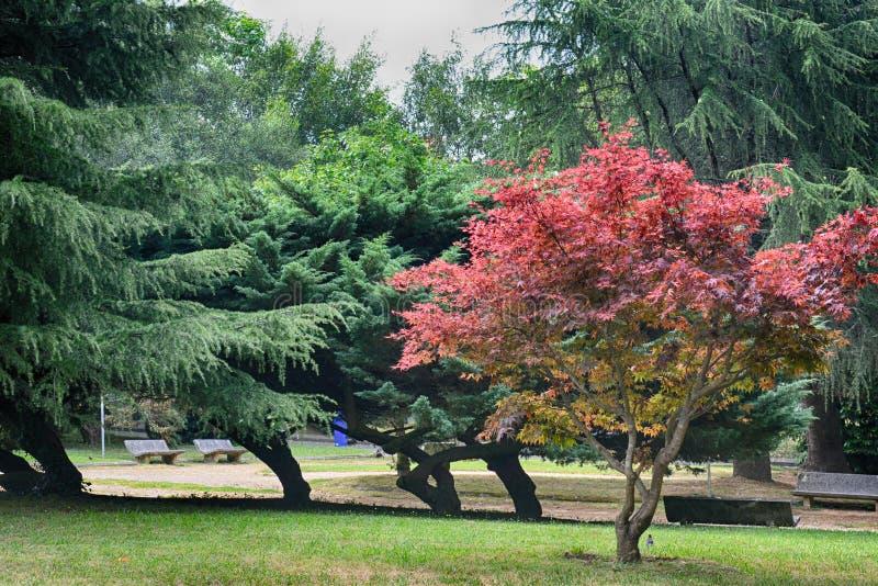 Το πάρκο, Σαντιάγο de Compostela στοκ εικόνα με δικαίωμα ελεύθερης χρήσης