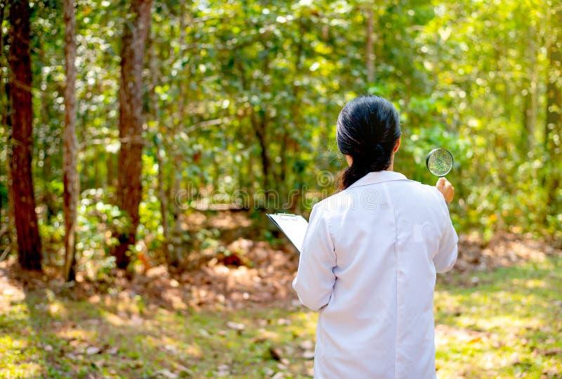 Το πίσω μέρος της ενίσχυσης λαβής γυναικών επιστημόνων - το γυαλί και το έγγραφο κοιτάζουν στο δάσος με την έννοια της έρευνας κα στοκ φωτογραφία