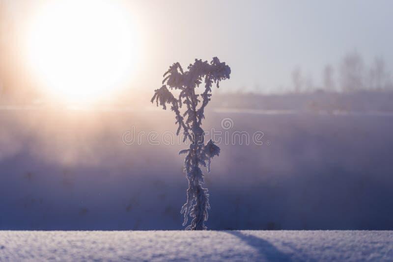 Το παγωμένο ξηρό εσώρουχο στο χειμερινό ομιχλώδες πρωί στον καλλιτεχνικό μινιμαλισμό συντονίζει με την εκλεκτική εστίαση στοκ εικόνα