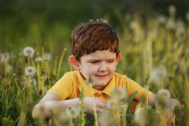 Το παιδί κάθεται σε έναν τομέα των πικραλίδων στοκ φωτογραφία με δικαίωμα ελεύθερης χρήσης