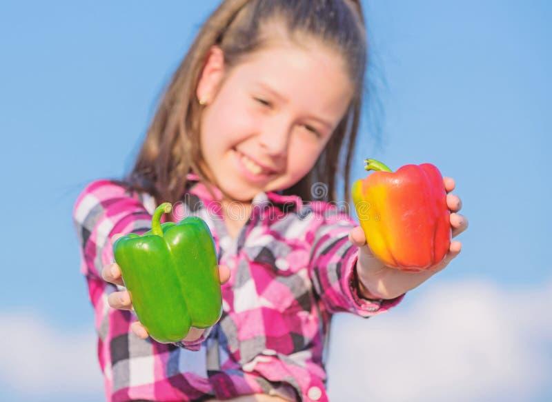 Το παιδί κρατά το ώριμο παιδί συγκομιδών πιπεριών που παρουσιάζει τα είδη πιπεριού Homegrown λαχανικά συγκομιδών πτώσης Επιλέξτε  στοκ εικόνες