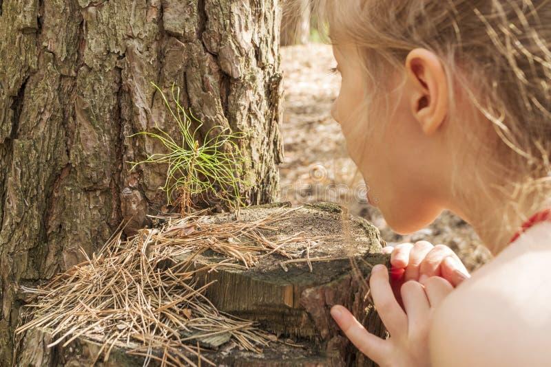 Το παιδί μελετά το νεαρό βλαστό πεύκων στοκ φωτογραφίες