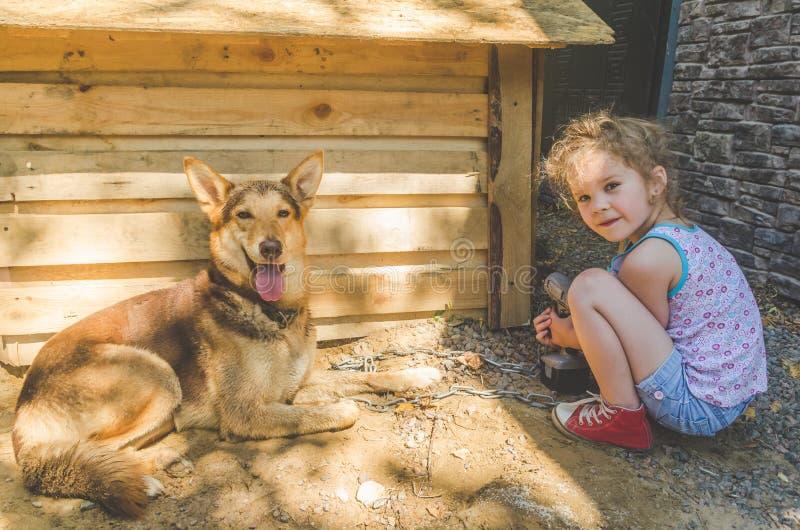 Το παιδί χτίζει το θάλαμο για τα σκυλιά στοκ εικόνα