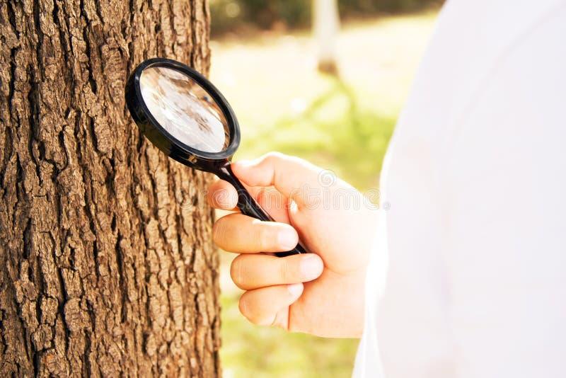 Το παιδί εξετάζει το δέντρο με την ενίσχυση - γυαλί στοκ φωτογραφία