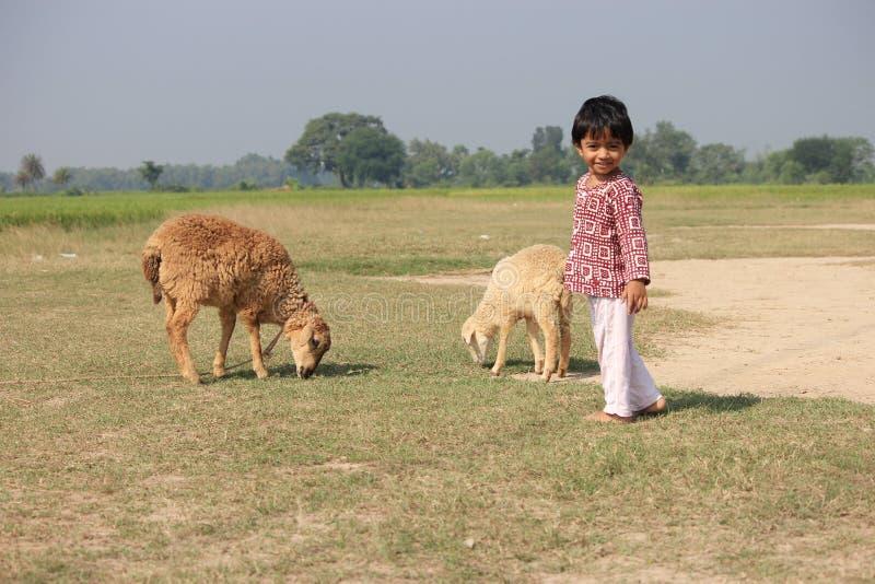 Το παιδί και το πρόβατο είναι αρχειοθετημένη στοκ εικόνες