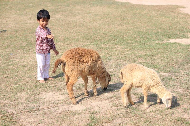 Το παιδί και το πρόβατο είναι αρχειοθετημένη στοκ φωτογραφίες