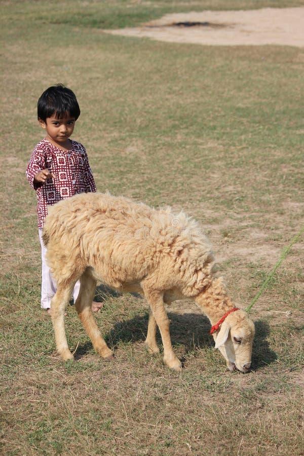 Το παιδί και το πρόβατο είναι στον τομέα στοκ φωτογραφίες