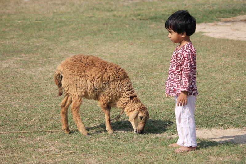 Το παιδί και το πρόβατο είναι στον τομέα στοκ εικόνες
