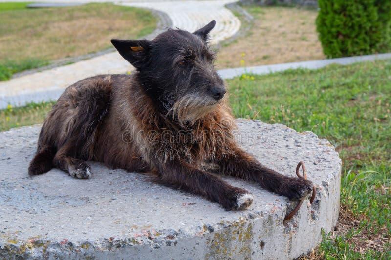 Το παλαιό άστεγο σκυλί βρίσκεται στο πάρκο στοκ φωτογραφία