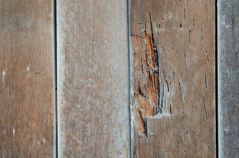 Το παλαιό ξύλο δεν χρησιμοποιείται επειδή τερμίτες στοκ εικόνα