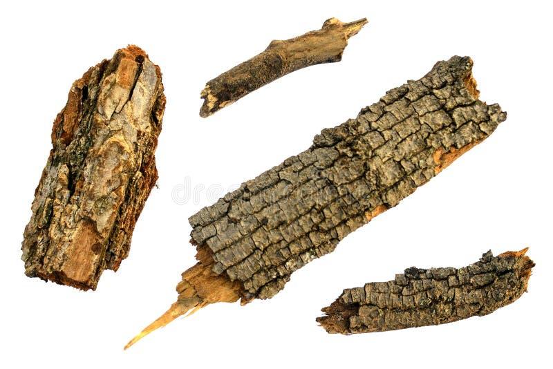 Το παλαιό φθινόπωρο μερών διακλαδίζεται κλαδίσκοι και ξύλινο δέντρο φ στοκ φωτογραφία με δικαίωμα ελεύθερης χρήσης