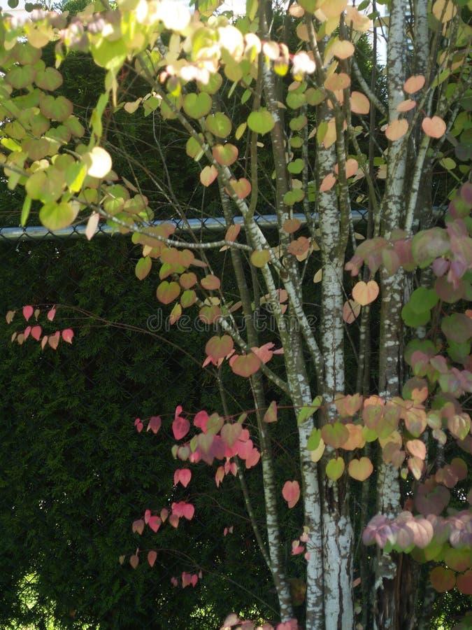 το πεδίο ανθίζει τις άγρι&alp στοκ φωτογραφία με δικαίωμα ελεύθερης χρήσης