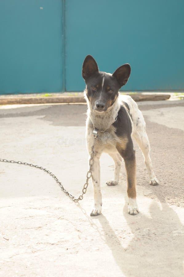 Το περίεργο σκυλί περιμένει έναν περίπατο στοκ φωτογραφίες με δικαίωμα ελεύθερης χρήσης