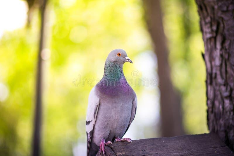 Το περιστέρι κάθεται σε ένα σπίτι πουλιών στοκ φωτογραφίες με δικαίωμα ελεύθερης χρήσης