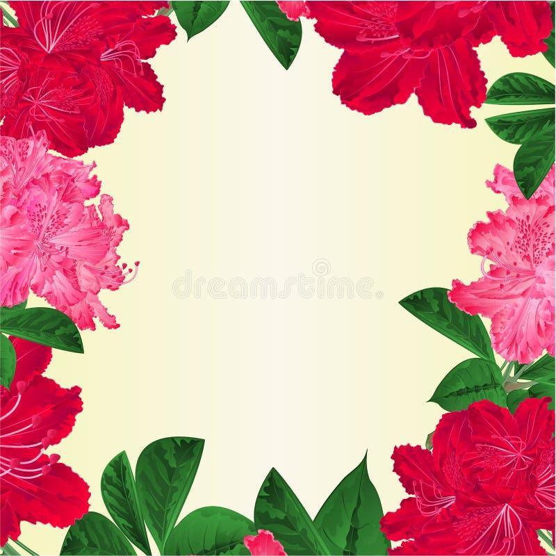 Το πλαίσιο ανθίζει τη ρόδινη άσπρη και κόκκινη rhododendrons εκλεκτής ποιότητας διανυσματική βοτανική απεικόνιση θάμνων βουνών κλ διανυσματική απεικόνιση