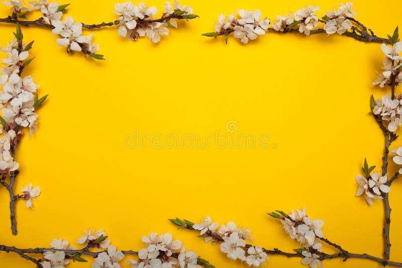 Το πλαίσιο Minimalistic του ανθίζοντας βερίκοκου διακλαδίζεται σε ένα κίτρινο υπόβαθρο, κενό διάστημα για το κείμενο διανυσματική απεικόνιση
