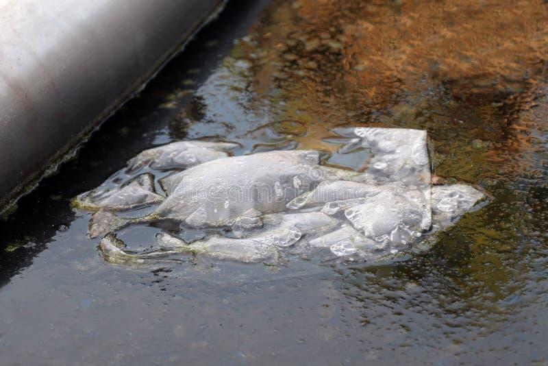 Το πλαστικό φίμωμα αποβλήτων στο νερό σάπιο, πλαστική τσάντα αποβλήτων που επιπλέει στο νερό είναι σάπιο στη λίμνη με το βρύο και στοκ εικόνα με δικαίωμα ελεύθερης χρήσης