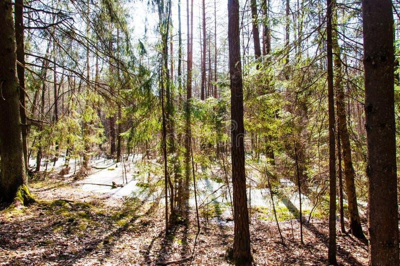 Το πλημμυρισμένο δάσος έγινε έλος στοκ φωτογραφίες με δικαίωμα ελεύθερης χρήσης