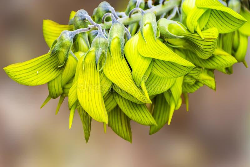 Το πολύ ασυνήθιστο και ζαλίζοντας λουλούδι πουλιών στοκ εικόνα με δικαίωμα ελεύθερης χρήσης