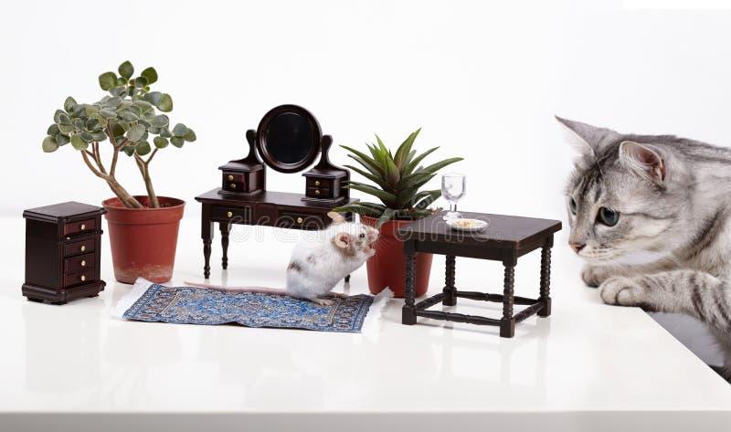 Το ποντίκι κρύβει στο σπίτι από τη γάτα στοκ εικόνες με δικαίωμα ελεύθερης χρήσης